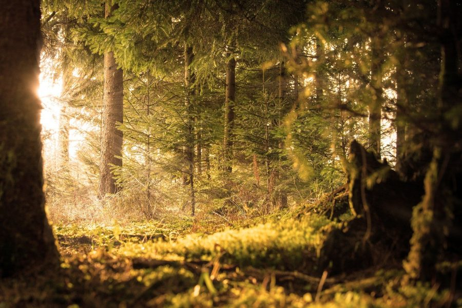 forest-2169285_1920 (1)